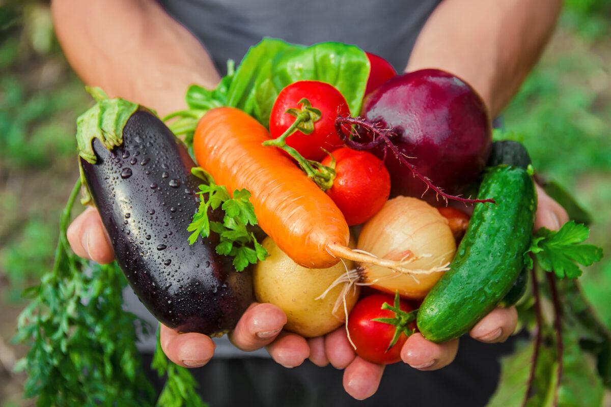 homemade vegetables in the hands of men. harvest. selective focus. summer.